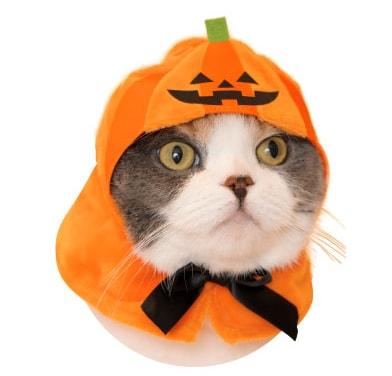 かわいい かわいい ねこハロウィンちゃん、かぼちゃバージョン