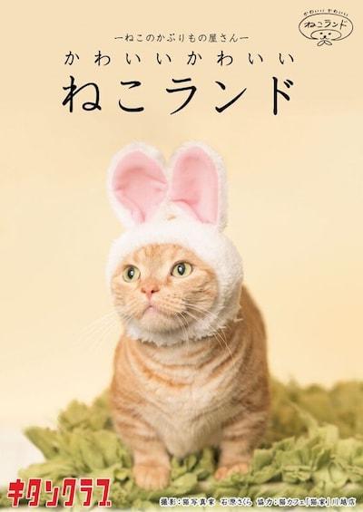 キタンクラブのカプセルトイ「かわいいかわいい 猫のかぶりもの」シリーズ