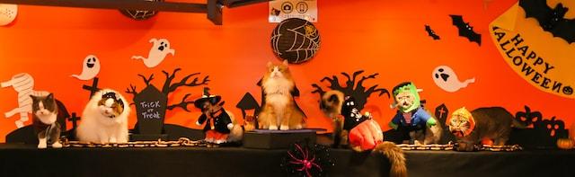 ハロウィンをテーマにしたキャンペーンイベント「ハロウィンにゃんぼ!くじ」