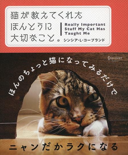 書籍「猫が教えてくれたほんとうに大切なこと」