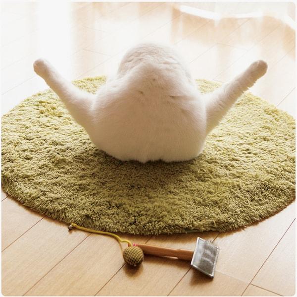 後ろから見た猫の開脚ポーズ by 写真集「ねこのおみあし」