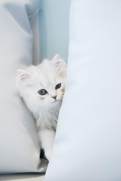 猫カフェ MoCHA(モカ)イオンレイクタウン店の猫スタッフ4