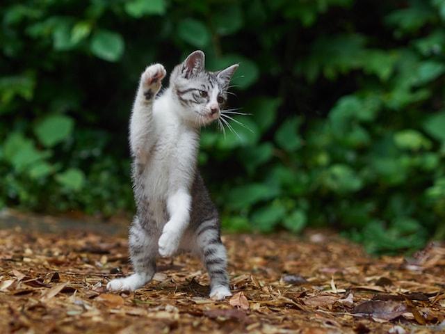 拳法の構えをする子猫 by のら猫拳キッズ