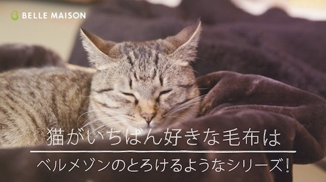 ネコリパブリックの猫が気に入ったのはとろけるようなシリーズ