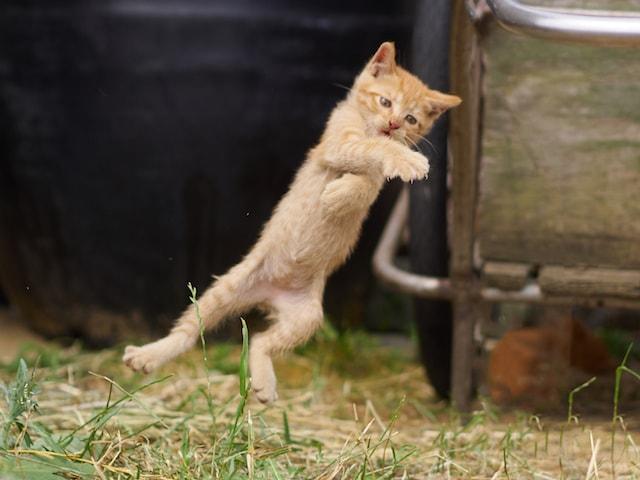 真剣にのら猫拳法の修行に励む子猫 by のら猫拳キッズ