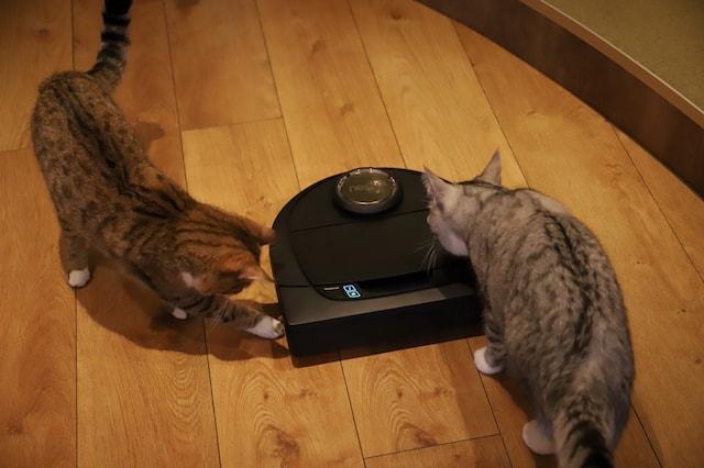ロボット型掃除機で遊ぶモカラウンジ池袋東口のネコたち