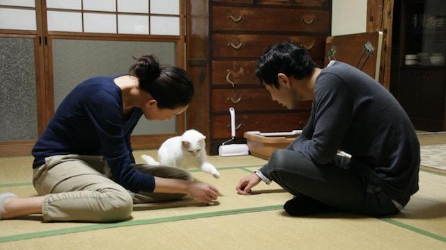 猫を可愛がるシーン by 映画「愛しのノラ~幸せのめぐり逢い」