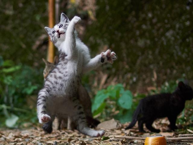 本気で練習する子猫 by のら猫拳キッズ