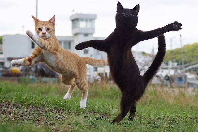 まるでスタンド使い!?の猫 by のら猫拳キッズ