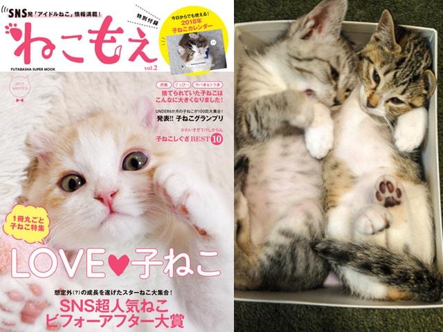 SNS発のアイドル猫情報誌「ねこもえ」第2弾は子ねこ特集ですニャ