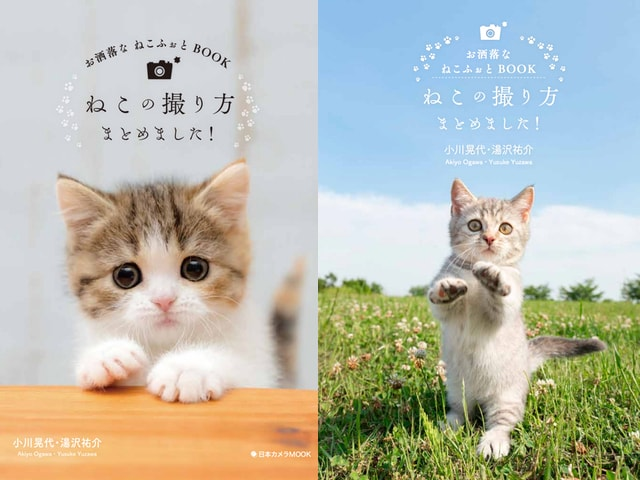 プロが教える、スマホや本格カメラを使った猫のオシャレな撮影方法