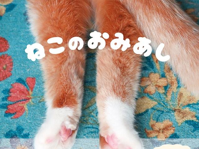 猫の足だけを収録したマニアックな写真集「ねこのおみあし」