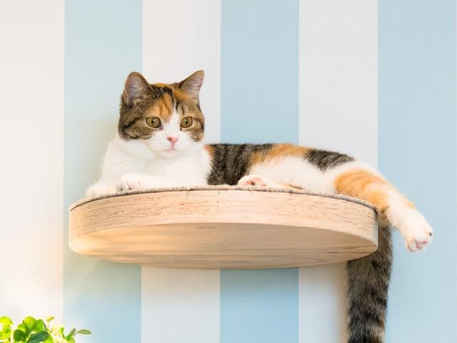 お洒落な猫カフェMoCHA、イオンレイクタウンに新店舗をオープン