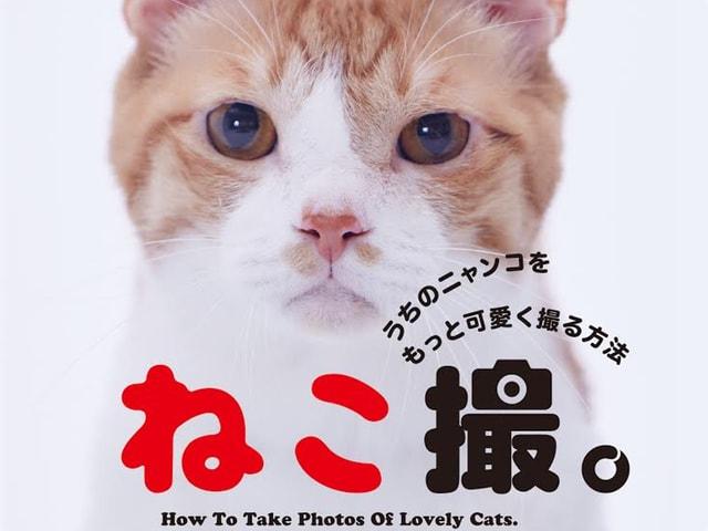 スター猫の金時がモデルの書籍「ねこ撮。うちのニャンコをもっと可愛く撮る方法」