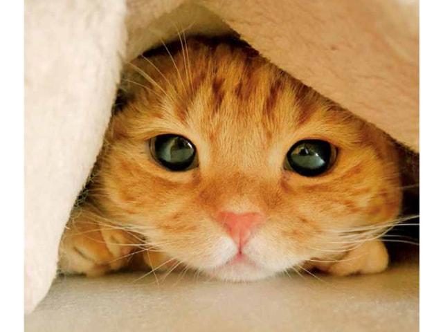 猫やウサギなど、インスタで人気のモフモフ動物写真集「#ふわもこ部」