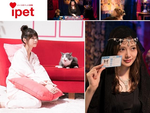 アイペット損保、猫×乃木坂46のメンバーによるウェブCMを公開