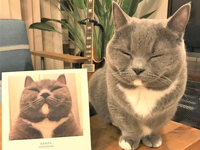 猫のフォトブックを2000冊展示する特別展が二子玉川で開催