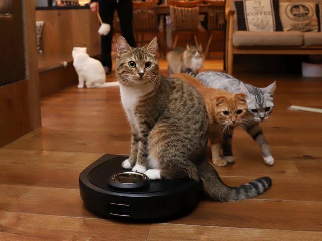 池袋東口の猫カフェMoCHA、米国シェア2位のロボット掃除機を試験導入中