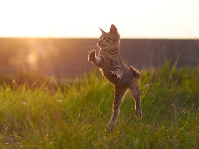 夕暮れでも拳法の練習に励む子猫 by のら猫拳キッズ