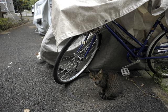 ブサイクな野良猫「ぽー」 by 書籍「やさしいねこ」