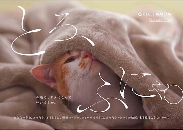 ベルメゾンの「とろけるような毛布」に包まれる猫