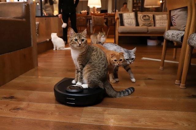 ロボット型掃除機乗るモカラウンジ池袋東口店の猫