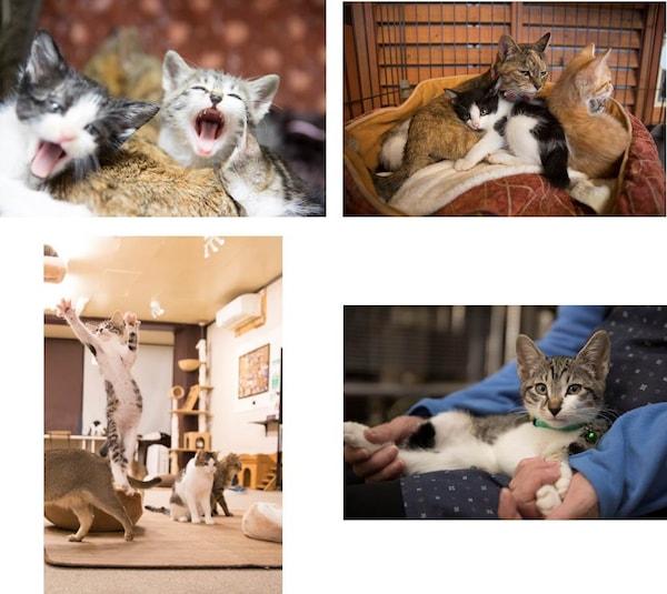 猫写真集「HOGO猫」の収録写真イメージ