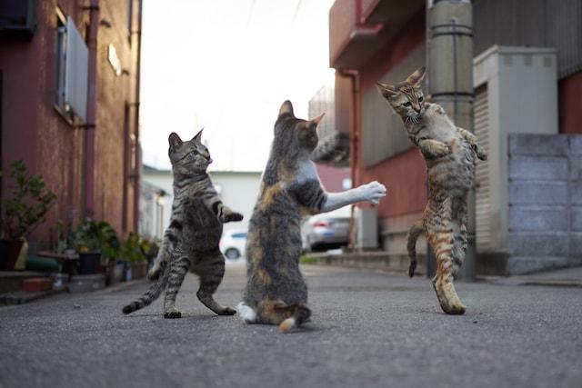 3匹の猫による組手の練習 by のら猫拳キッズ