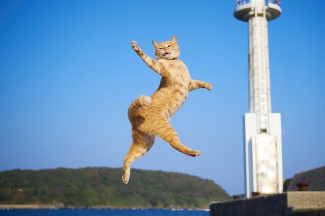 空高くジャンプするアクロバティック猫 by のら猫拳キッズ