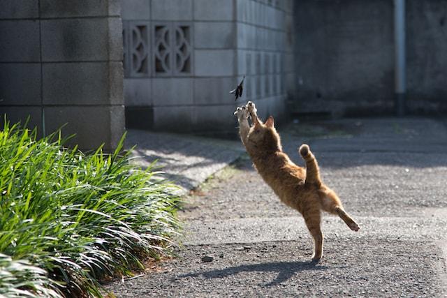 獲物を捕まえるのに必死な猫の写真by 必死すぎるネコ