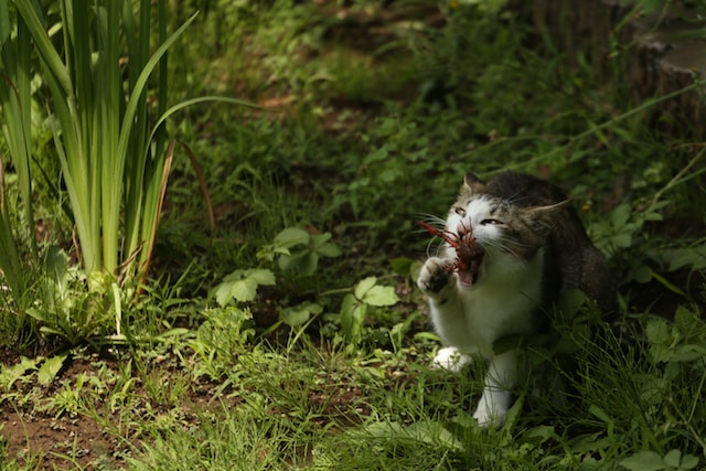 ザリガニ相手に必死な猫の写真by 必死すぎるネコ