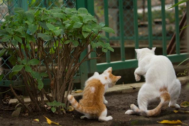 昆虫相手に親子?で必死な猫の写真by 必死すぎるネコ
