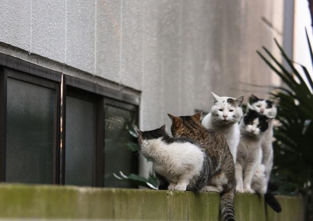ネコザイルするのに必死な猫の写真by 必死すぎるネコ