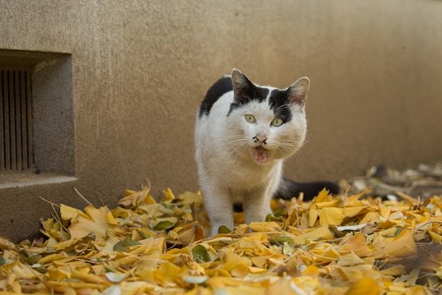 リアクションに必死な猫の写真by 必死すぎるネコ