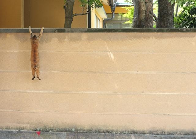 壁から落ちそうで必死な猫の写真by 必死すぎるネコ