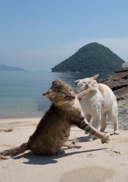 負けられない戦いで必死な猫の写真by 必死すぎるネコ
