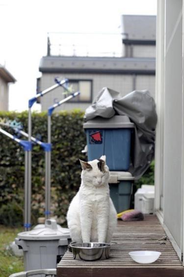 地域猫となった「ぽー」 by 書籍「やさしいねこ」