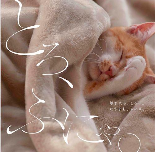 ベルメゾンの「とろけるような毛布」で眠る猫