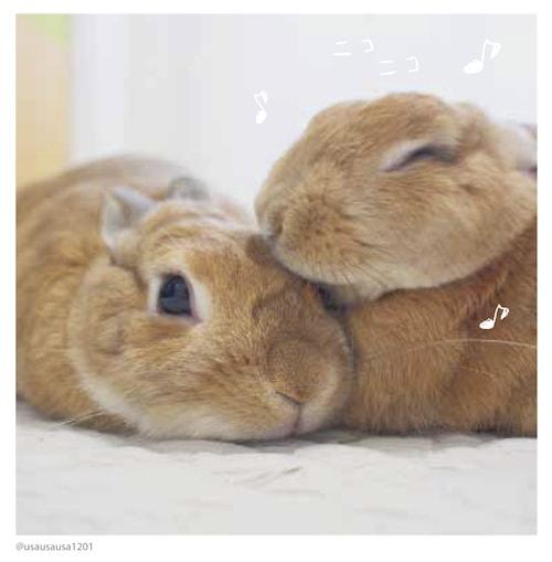 @usausausa1201(ウサギのクッキーとかんぺい)の写真 by #ふわもこ部