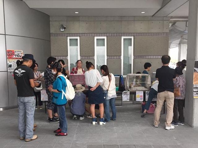 福岡ねこともの会による、猫の譲渡会の開催風景