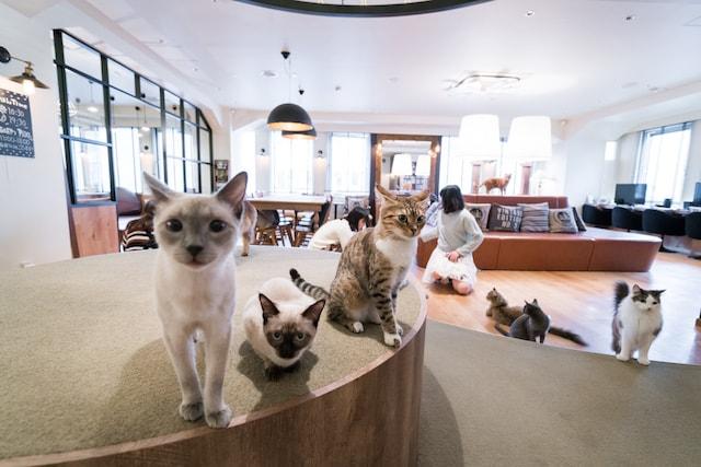 モカラウンジ池袋東口の猫スタッフたち