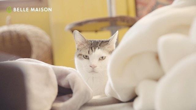 とろけるようなシリーズに埋もれながら見上げているネコリパブリックの猫