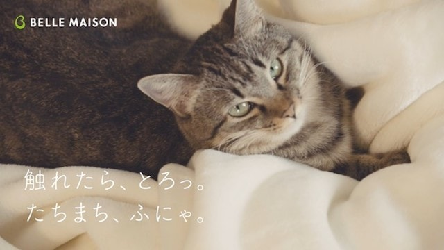 とろけるようなシリーズの上に座るネコリパブリックの猫