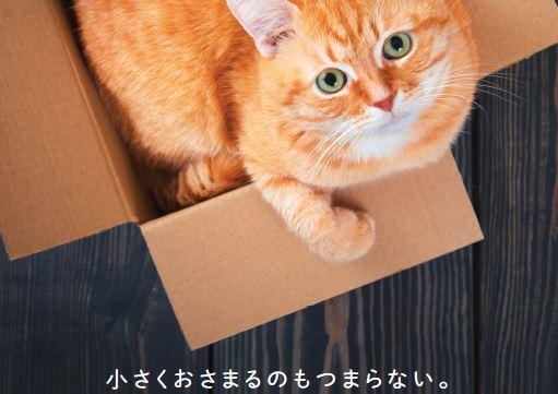 猫が教えてくれたほんとうに大切なこと
