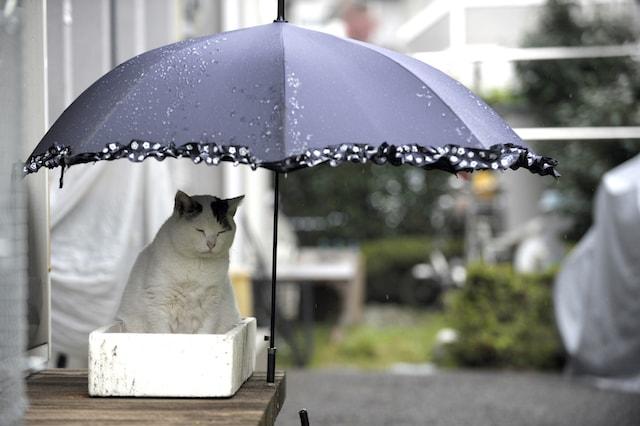 雨宿りする猫の「ぽー」 by 書籍「やさしいねこ」