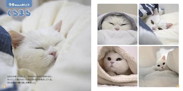 美人白猫として有名なうらちゃんの写真 by ねこのおしごと