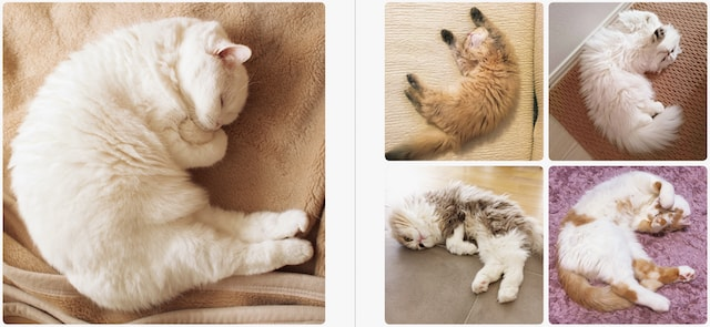 寝ている猫の後ろ足 by 写真集「ねこのおみあし」