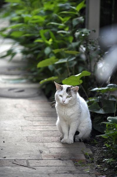 遠慮がちだった猫の「ぽー」 by 書籍「やさしいねこ」