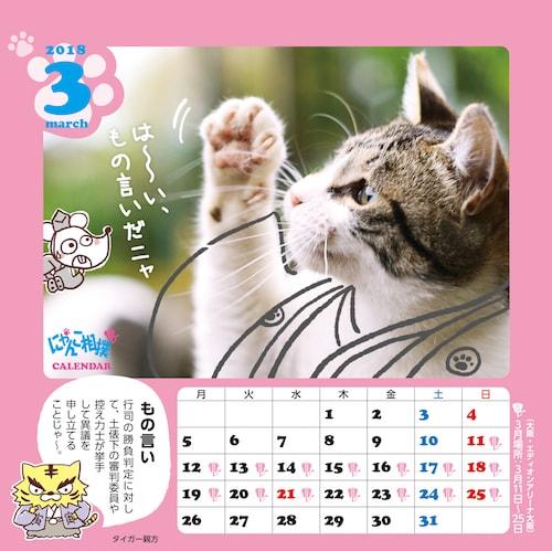 にゃんこ相撲カレンダーの写真は、猫写真家・沖昌之さんが担当