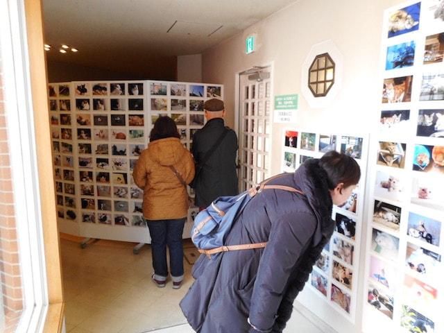 大佛次郎×ねこ写真展2017の開催風景